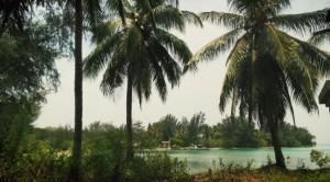 050972500_1414860107-pulau_tunda_yg_asri_dengan_pepohonannya