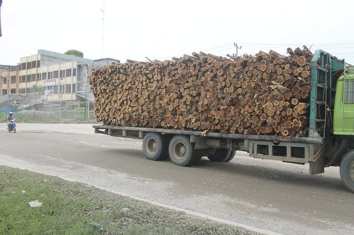 kayu rapp
