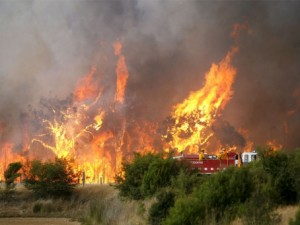 artikel-kebakaran-hutan